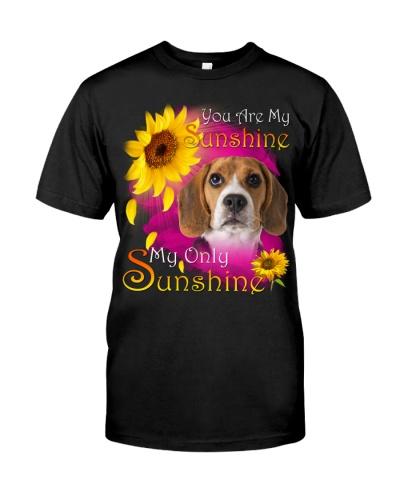 Beagle-Face-My Sunshine