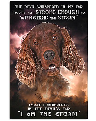 Irish Setter - Storm