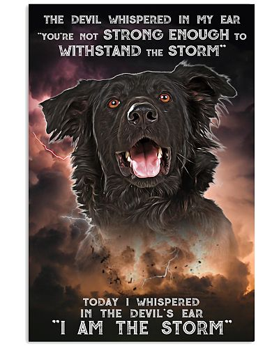 Flat Coated Retriever - Storm