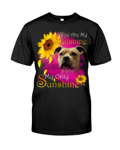 American Staffordshire Terrier-Face-My Sunshine
