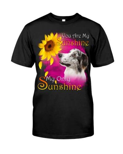 Border Collie-My Sunshine