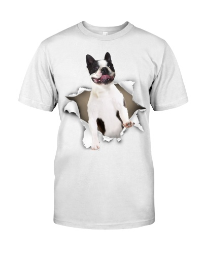 Boston Terrier - Torn02