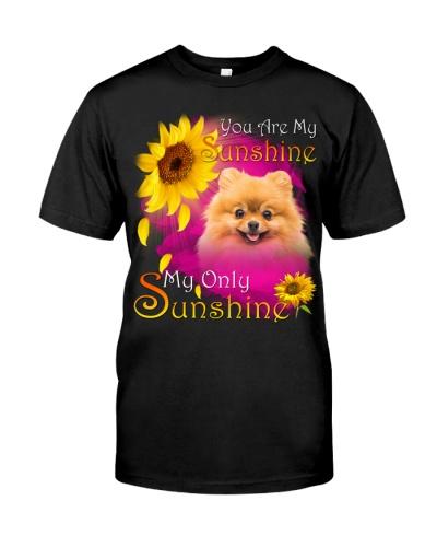 Pomeranian-Face-My Sunshine