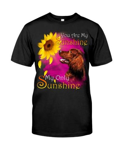 Irish Setter-My Sunshine