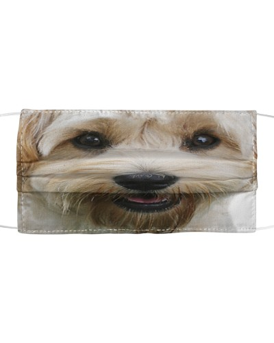 Cavachon-Face Mask