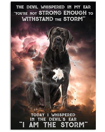 Cane Corso - Storm