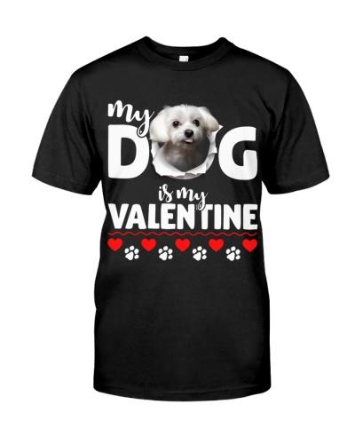 Maltese-My Valentine