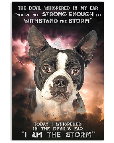 Boston Terrier - Storm