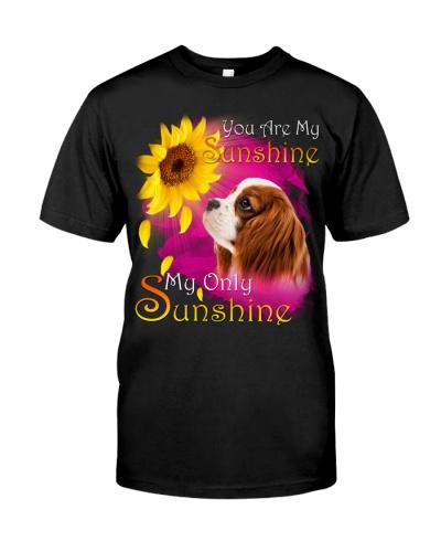 Cavalier King Charles Spaniel-My Sunshine