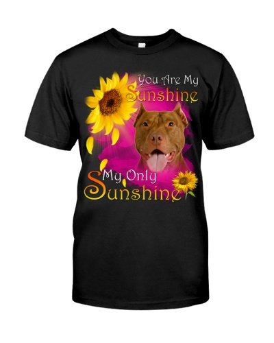 American Pit Bull Terrier-Face-My Sunshine