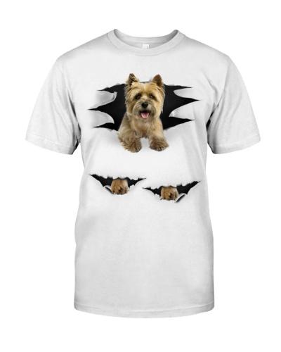 Cairn Terrier - Torn03