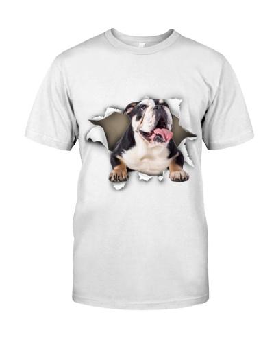 English Bulldog-02 - Torn02