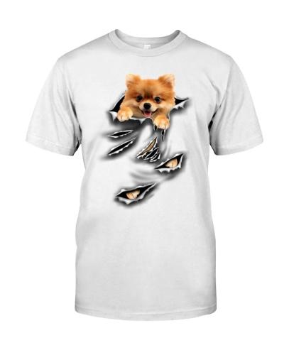Pomeranian - Torn04