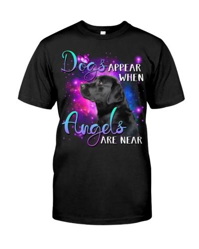 Labrador-Angels Are Near