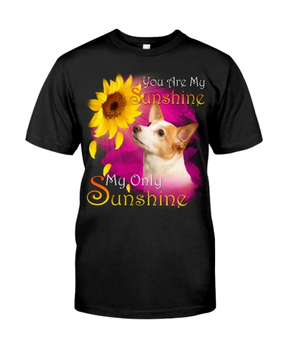 Jack Russell Terrier-02-My Sunshine