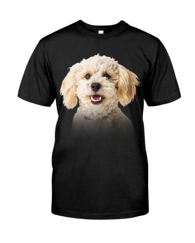 Poodle Crossbreed-Dog Face