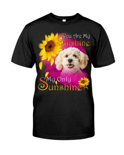 Poodle Crossbreed-Face-My Sunshine