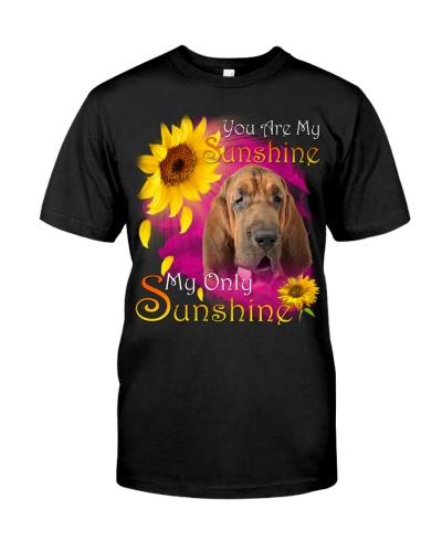 Bloodhound-Face-My Sunshine