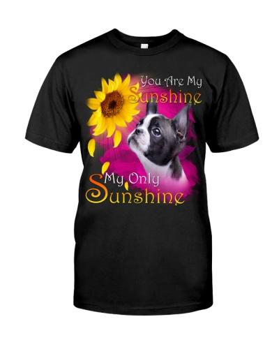 Boston Terrier-My Sunshine