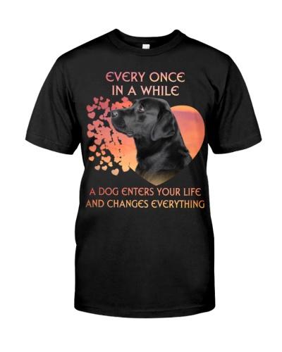 Labrador-Enters Your Life