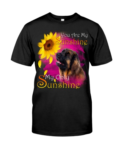 Leonberger-02-My Sunshine