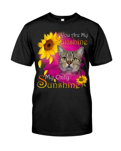 American Shorthair Cat-Face-My Sunshine