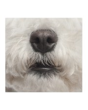 Bichon Frise-Mask Mouth Cloth face mask aos-face-mask-coverlet-lifestyle-front-02