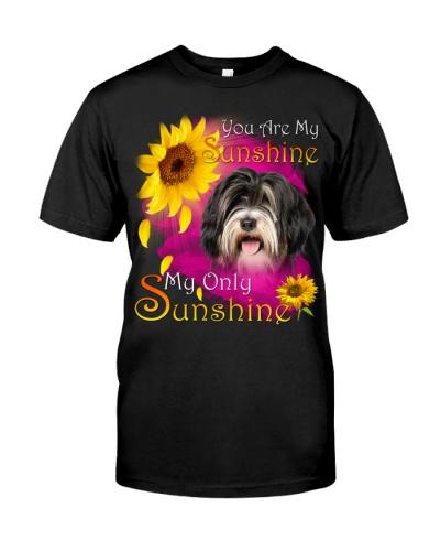 Tibetan Terrier-Face-My Sunshine