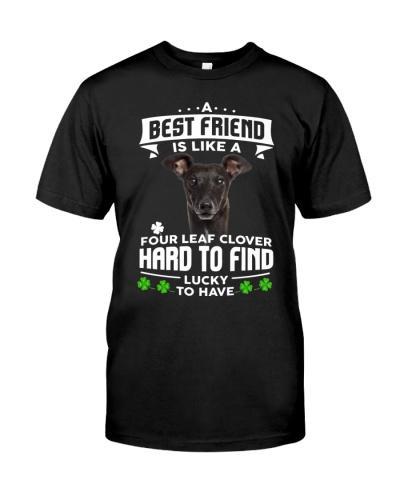 Greyhound-Best Friend
