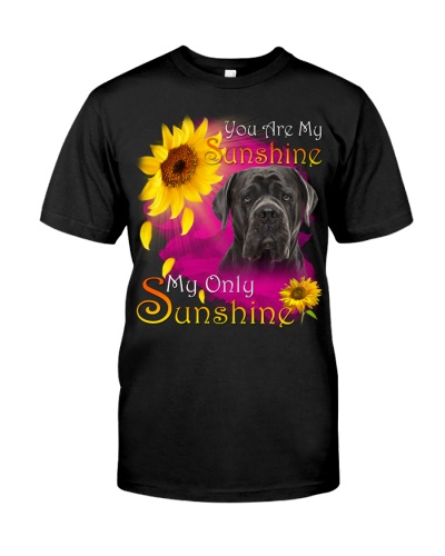 Cane Corso-Face-My Sunshine