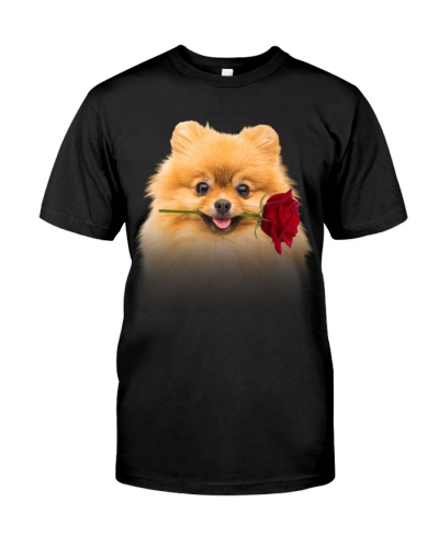 Pomeranian-Rose