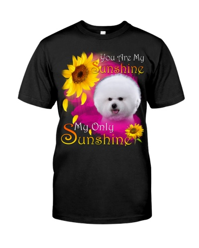 Bichon-Face-My Sunshine