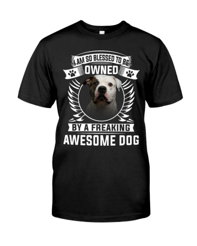 American Bulldog-Awesome Dog