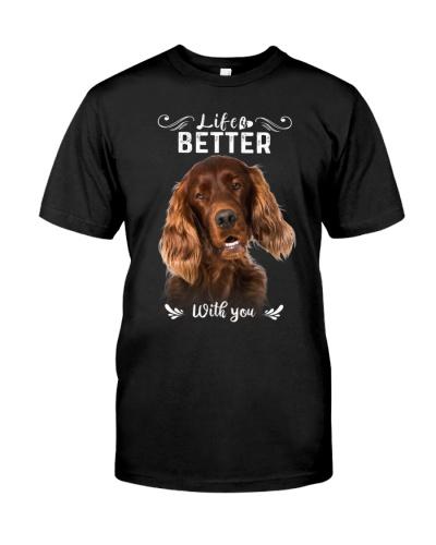 Irish Setter - Better