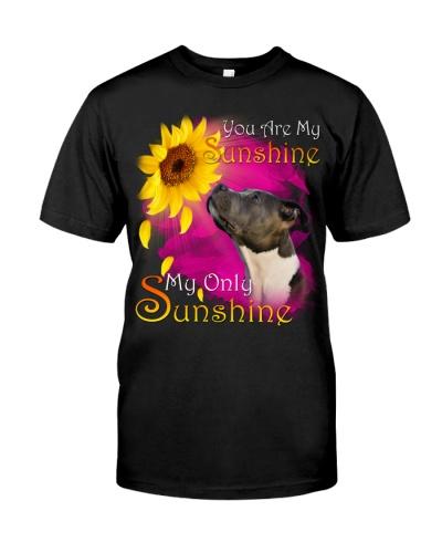 American Pit Bull Terrier-My Sunshine
