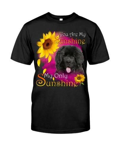 Newfoundland-Face-My Sunshine