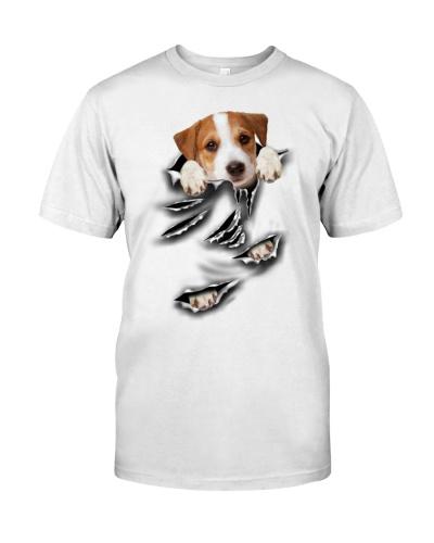 Jack Russell Terrier - Torn04