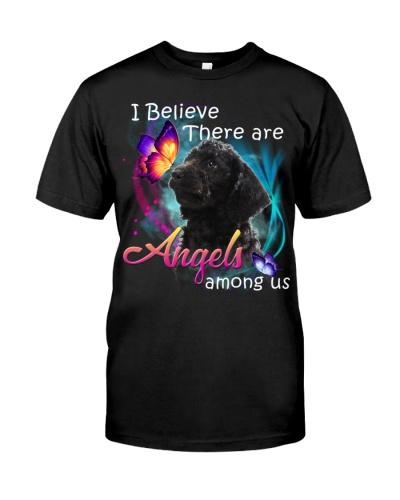 Labradoodle-02-Angels Among Us