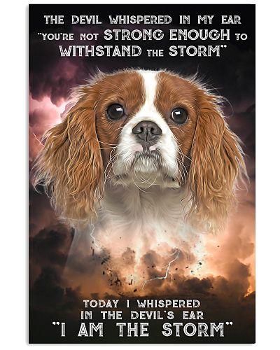 Cavalier King Charles Spaniel - Storm