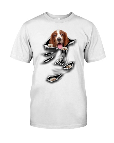 Welsh Springer Spaniel - Torn04