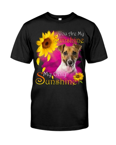 Jack Russell Terrier-Face-My Sunshine