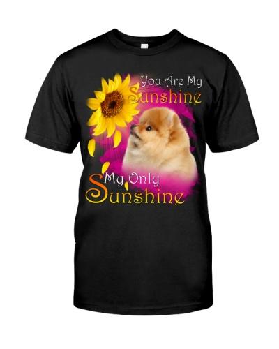 Pomeranian-My Sunshine