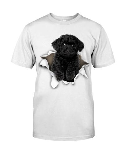 Black Toy Poodle - Torn02
