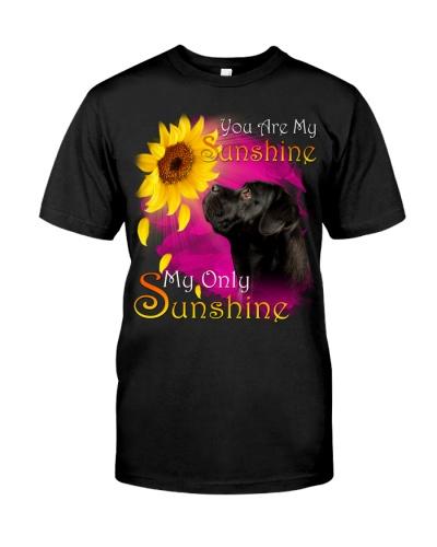 Cane Corso-02-My Sunshine