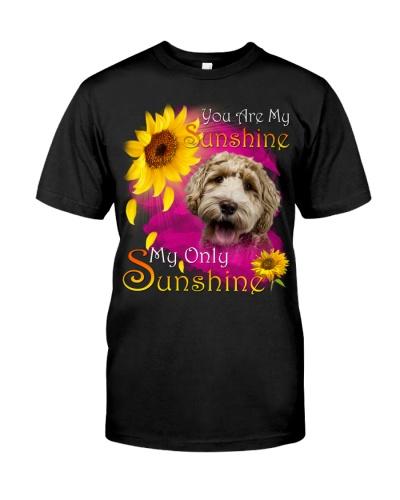 Labradoodle-Face-My Sunshine