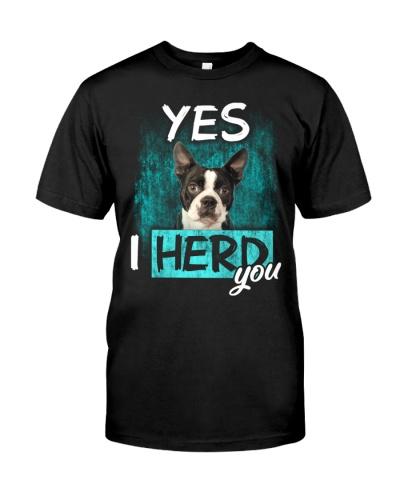 Boston Terrier-02-I Herd You