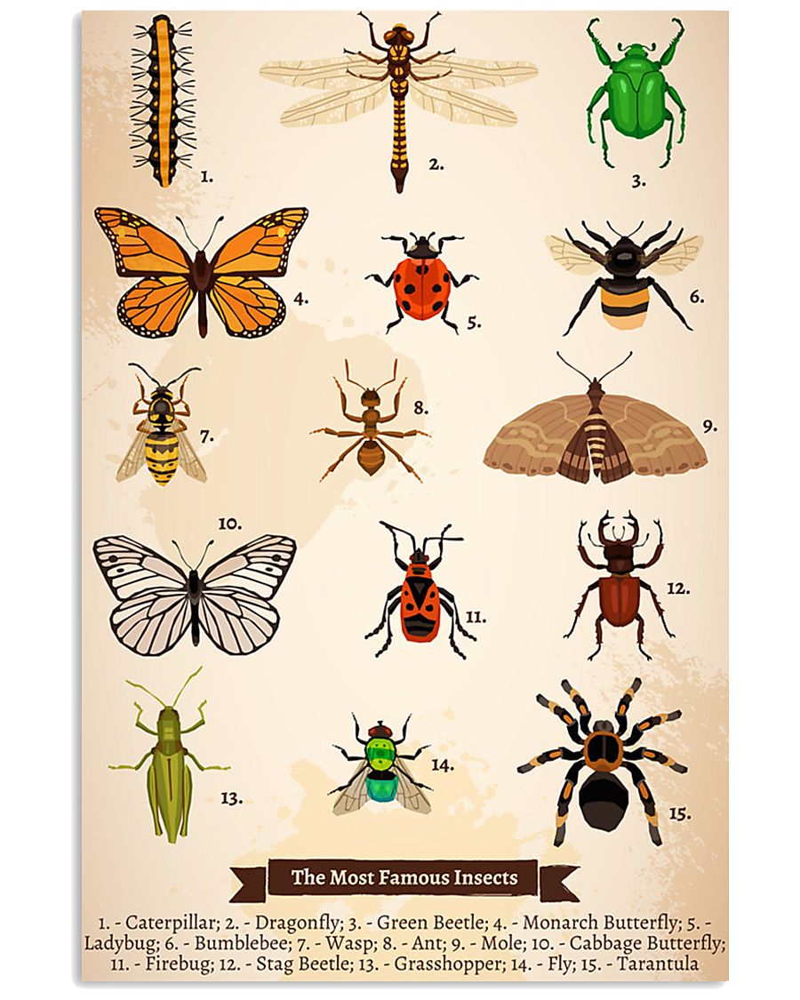 HD Insects Poster 11x17 Poster
