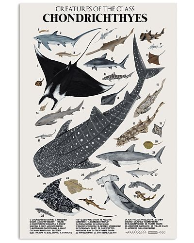 HD Chondrichthyes Poster