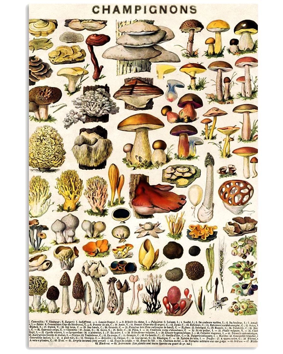 HD Champignons 11x17 Poster showcase