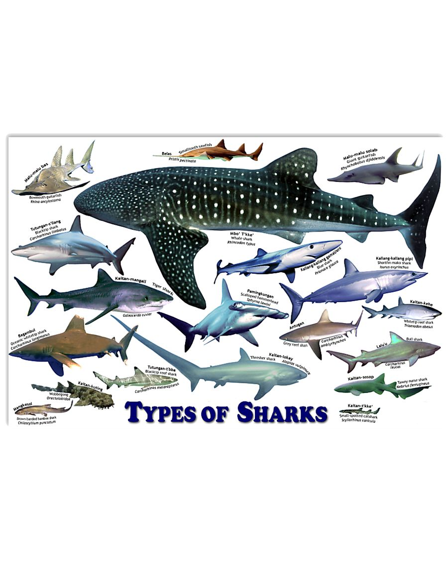 HD Types Of Sharks Poster 36x24 Poster